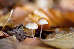 It's cold outside- a blanket please Mushroom Nature Fungus Toadstool Fragility Close-up Beauty In Nature Macro Photography EyeEm Masterclass Nature On Your Doorstep Mushrooms Couple Eye4nature Fall Fall Beauty Autumn Autumn Colors EyeEm Best Shots - Natur (youbooth.de) Tags: mushroom nature fungus toadstool fragility closeup beautyinnature macrophotography eyeemmasterclass natureonyourdoorstep mushrooms couple eye4nature fall fallbeauty autumn autumncolors eyeembestshotsnature macro nocats ilovephotography simplequietlove forest mushroompictures naturephotography