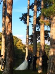 Shadows and Tall Trees (eva gardner) Tags: laxenburg