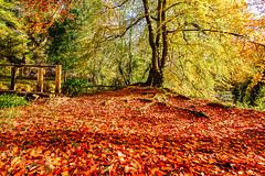 Autumn colours (murphy197) Tags: autumn anneflaherty nikond7100 tokina1116mm colour light