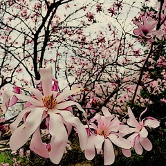 IMG_4648 (sosparkly) Tags: instagram nature trees plants paris england edinburgh florida bermuda beach whimsy