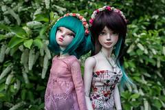 Wreaths (- ) Tags: bjd msd iplehouse tania alicecatwell fairyland minifee rheia