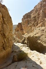 4th NBO Oman Desert Marathon - After Stage 6