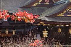 DSC02778 (MrSUIZOU) Tags: 京都 紅葉 北野天満宮 平野神社 十月桜