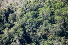 Búzios-RJ (Johnny Photofucker) Tags: búzios rj verde green forest foresta floresta vegetação lightroom brasil brazil brasile flora árvores alberi trees