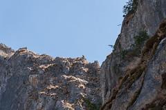 Garganta de la Yecla, Santo Domingo de Silos (jacqueline.poggi) Tags: desfiladerodelayecla espagne españa gargantadelayecla parquenaturaldelayecla santodomingodesilos spain yecla arroyodelcauce buitre canyon gorge rio river vautour vultur
