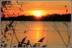 Coucher de soleil automnal (Les photos de LN) Tags: coucherdesoleil sunset ciel soleil couleurs lumière nature automne berges rivages garonne fleuve aquitaine sudouest reflets roseaux crépuscule