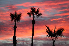 It's A Beautiful Morning (Scott Douglas Photography) Tags: sunrise yuma palm colour