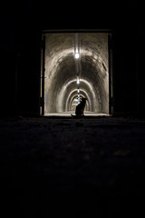 Tunel Gri (Doris Baric) Tags: night lights city dark dog shadow tunel
