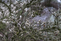 Erster Frost - 0032_Web (berni.radke) Tags: ersterfrost frost raureif wassertropfen rime eisblumen eiskristalle iceflowers icecrystals escarcha