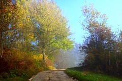 Brume d'octobre (GastonGraphy) Tags: octobre october outdoor nature landscape trees autumn automne