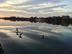 Ducks above the sky (kielhorn.christoph) Tags: hannover ducks enten maschsee see sonnenaufgang risingsun sun tree lake mirror clouds wolken deutschland niedersachsen hauptstadt morgenröte natur fantastisch awesome