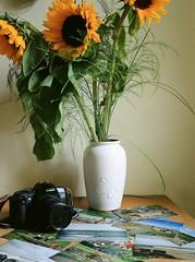 Memories (amoureuxee) Tags: pictures canon eos photo meer memories sunflower kamera analoge 700d