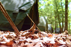 Canvas (Alexandra Keathley) Tags: boy summer camp ford nature leaves america bug you critter ant lies scout front tent betty fallen scouts what inside behind comparison gerber reservation adventureland pales