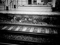 Dead Feathers (Mr Exploding) Tags: monochrome pigeon platform tracks rail hampshire railwaystation portsmouth vignette fratton vignetteforandroid frattonstation