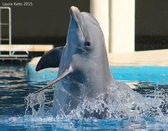 Guarina (Laura Keto) Tags: animals dolphins animales delfines marinemammals animalphotography zoomadrid mamiferosmarinos