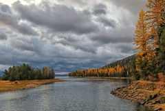 Larch Love (Philip Kuntz) Tags: autumn stormy idaho storms larches donnelly cascadelake aftertherains tamaracks autumngold tamarackbridge cascadelakeinlet