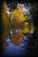 Ware_river1_10.2015 (www.EllwoodsImages.co.uk) Tags: autumn trees water hertfordshire ware riverlea