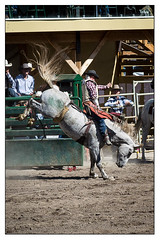 Bronc Riding (LC27LadyB) Tags: horse riding rodeo bronc