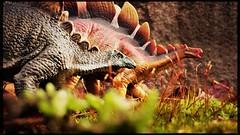 safety in numbers (Chris Blakeley) Tags: seattle dinosaur stegosaurus toydinosaur hipstamatic