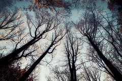 Reach to the Sky (iheartdenver5280) Tags: autumn trees fall nature silhouette forest woods bare