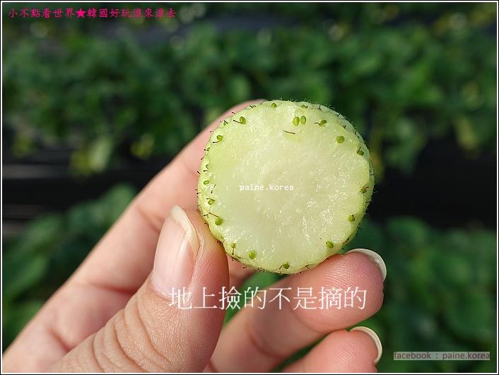 草莓園採草莓 (15).JPG