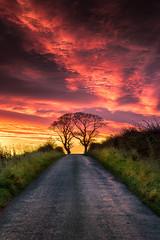 The Kissing Trees (devlin11) Tags: kinghorn trees kissing scotland scenery sunrise sky fife tranquil nikon morning magic
