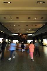Akeley Hall of African Mammals (markusOulehla) Tags: americanmuseumofnaturalhistory nyc newyorkcity markusoulehla nikond90 citytrip thebigapple usa manhattan