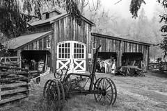 September Morning - May Valley BW (Don Thoreby) Tags: mayvalley mayvalleywashingtonstate horsefarms farms barns mayvalleyhighway squakmountain autumn fall tractors farmingequipment oldtractor vintagetractor hayrake squakmountainnursery fallcolors mapletrees countrylane johndeere johndeeretractors