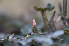 IMG_8093 (michaelpodger) Tags: flower tiny spring