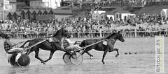 Course à Lancieux (photos par JPS) Tags: clean cheval lancieux ou pro quoi type poursiteweb