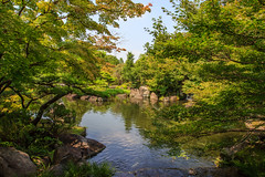 Sous les rables (StephanExposE) Tags: japon japan asia asie stephanexpose himeji himejipark park jardin parc garden arbre tree eau water lac tang cascade waterfall nature canon 600d 1635mm 1635mmf28liiusm