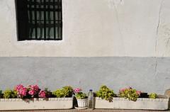 _DSC7593 (adrizufe) Tags: maeztu araba geranios ventana window adrizufe adrian adrinzubia basquecountry euskadi tiesto flowers flores