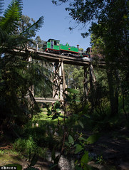 Monbulk Creek (Dobpics O'Brien) Tags: pbr pbps puffingbilly puffing pass locomotive engine train trestle 6a billy bridge belgrave victorian victoria vr rail railway railways steam