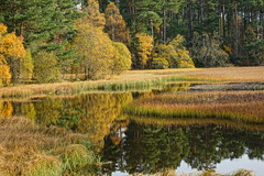 The Lochan. (artanglerPD) Tags: lochan autumn colours trees grasses water reflections calm
