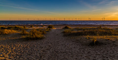 Windfarm (jammo s) Tags: greatyarmouth windfarm norfolk beach dunes sunrise autumn morning lightroom canoneos6d canonef24105mmf4lusm