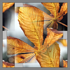 Old Chestnut! (PAUL Y-D) Tags: leaves chestnut psp corel autumn arty abstract