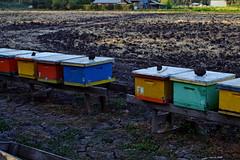(jo.alvarezv) Tags: chile campo country countryside campochileno chileancountry chileancountryside abejas bees miel honey colores colors colours colorido colourful colorful