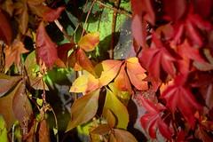 Autumn Tones (oliko2) Tags: autumn tones colours fall freiburg graffiti d7100 85mmf18 dof