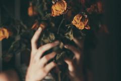 (Camila Iquiene) Tags: dry flowers hands flores secas mos