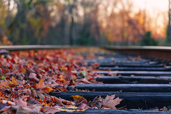 336/366 (Ravi_Shah) Tags: nj autumn cy365 potd tracks bokeh colors sony a6000 fall leaves railroad