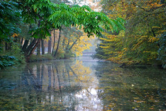 River of Silence (Liwesta) Tags: autumn herbst river fluss gelb wasser bunt colors colours pflanzen bume trees plants