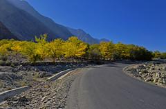 Autumn in Gilgit (Shehzaad Maroof Khan) Tags: gilgit autumn kkh karakoram highway trees gilgitbaltistan road ontheroad drive pakistan