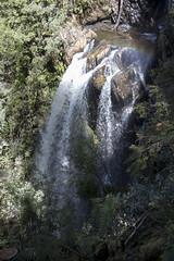 IMG_5546-Philosoher Falls Waratah-A (geoffgleave) Tags: philosopherfallstrack waratah forest waterfall