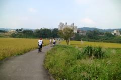 關西市區.發現小伯朗大道 + 小金城武樹 (nk@flickr) Tags: 關西 taiwan 新竹 friend cycling 台湾 志明 cheven 20161105 台灣 guanxi hsinchu 阿強 canonefm22mmf2stm