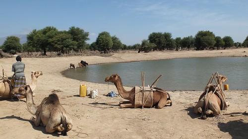 Djibouti_2014 - Point d'eau d'Andaba (Ouest)