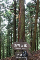 Kumano Kodo Trail highpoint 571m (Geoff Buck) Tags: japan kumanokodo kumano kodo trail hiking pilgrim highpoint signpost