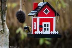 Hello anybody home (Flemming Andersen) Tags: bird mejse birds house feeding animal nature birdshouse vestervig northdenmarkregion denmark dk