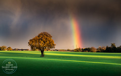 Prismatic (SimonTHGolfer) Tags: landscape landscapephotography tree field rainbow clouds storm mammatus bright littleglemham suffolk eastanglia uk nikon simontalbothurnphotography