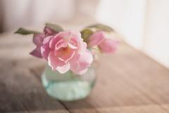 Rose Finalie (jm atkinson) Tags: rose blue bottle table stilllife pink light