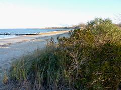 Beach at Old Bridge Waterfront Park (Dendroica cerulea) Tags: beach bay grass autumn raritanbay oldbridgewaterfrontpark laurenceharbor oldbridge middlesexcounty nj newjersey